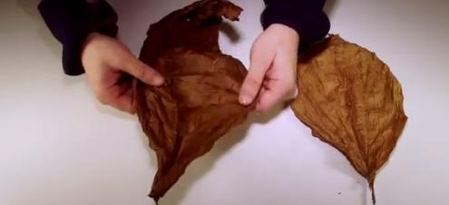 Whole Leaf Tobacco Handling & Storage Tutorial