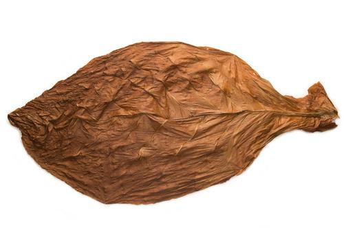 Havana Leaf