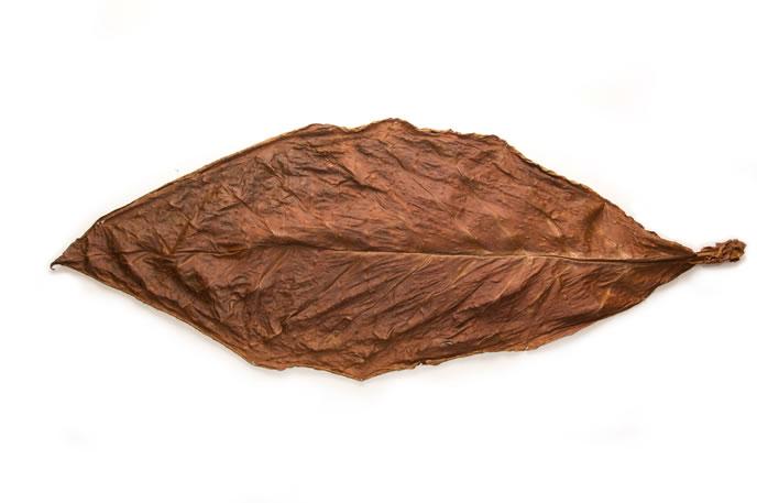 Light-Fire-Cured-Fronto-Leaf
