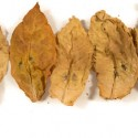 Tobacco Leaf… It's What We Specialize In!