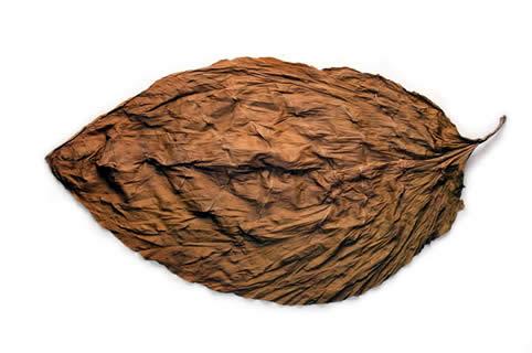 Ecuadorian Shade Leaf
