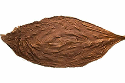 Dark Air Cured Fronto Leaf