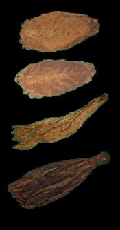 Bold Leaf Combo