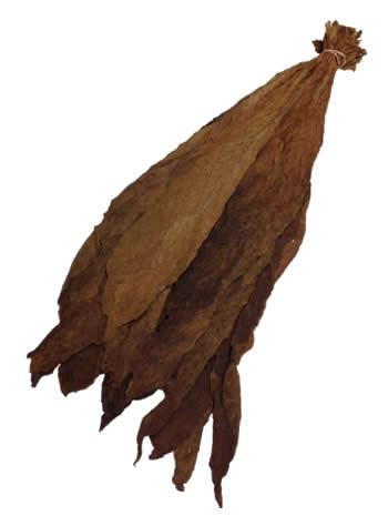 pennsylvania binder leaf