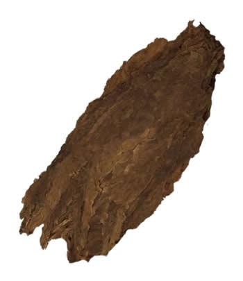 aged pennsylvania cigar filler