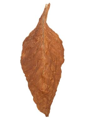 Dark Air Cured Fronto Leaf [O]