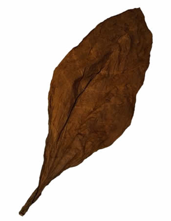 dominican-fronto-leaves