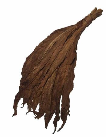 aged-fronto-leaf
