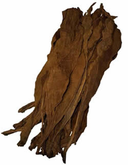 Dominican Fronto Leaf