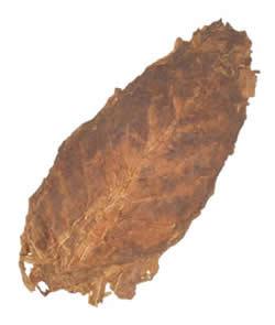 Aged Nicaraguan Tobacco | Ligero Long Filler