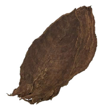 Nicaraguan-Seco-Esteli-cigar-filler-leaf