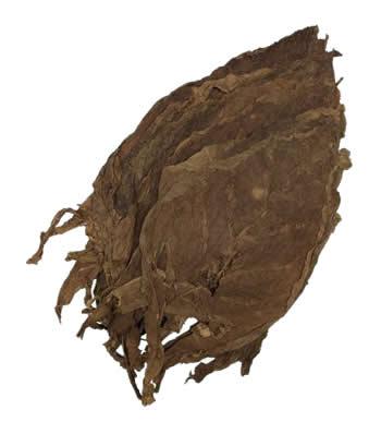 Nicaraguan-seco-condega-filler-leaf