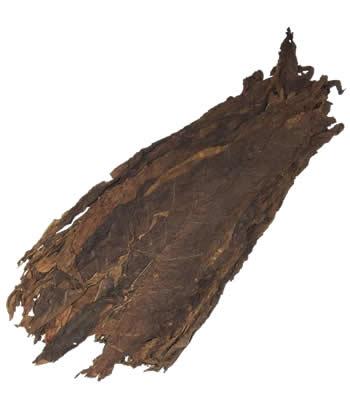 Paraguayan-Ligero-cigar-filler-leaf-tobacco
