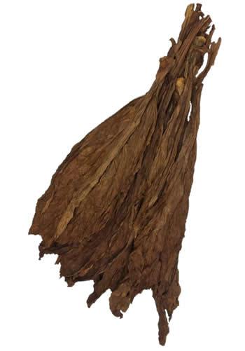 ct-havana-fronto-leaf