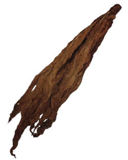 Dark Air Cured Fronto Leaf [O]