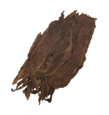 nicaraguan-ligero-Condega-filler-leaf