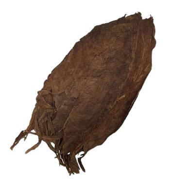 nicaraguan-ligero-esteli-aged-cigar-filler-leaf-tobacco