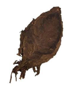 Nicaraguan Ligero Ometepe | Cigar Long Filler Leaf