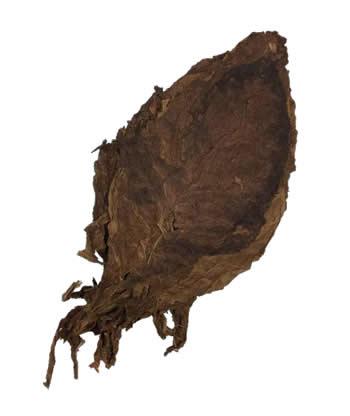 nicaraguan-ligero-ometepe-leaf