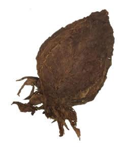 Nicaraguan Seco Ometepe | Cigar Long Filler Leaf