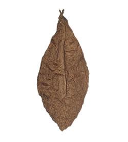 Ecuadorian-Corojo-Wrapper