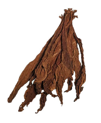 light-fire-cured-fronto-leaf-P