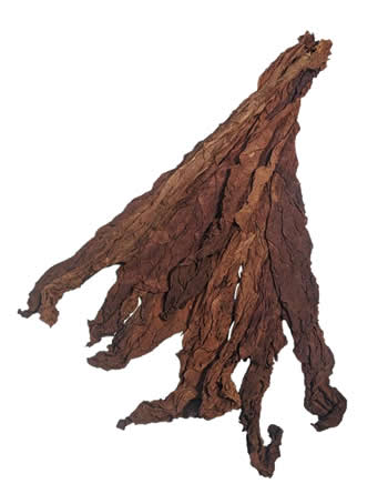 light-fire-cured-fronto-leaf-R