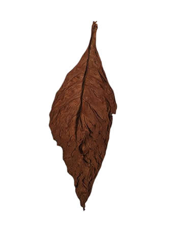 light-fire-cured-fronto-leaves-P