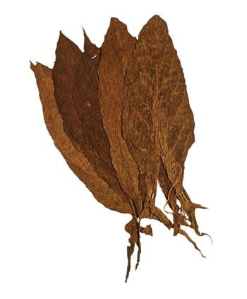 mexican-san-andres-viso-filler-leaf