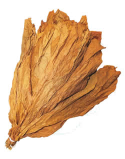 Nicaraguan CT Shade Leaf Wrapper