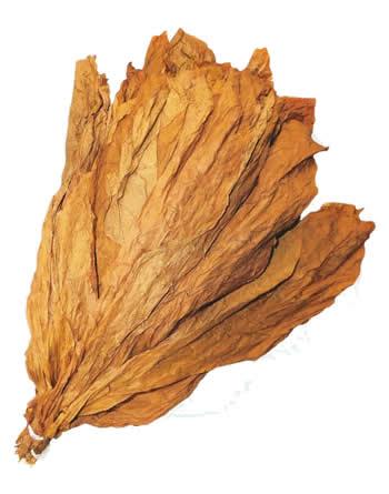 Nicaraguan-CT-Shade-Leaf-Wrapper