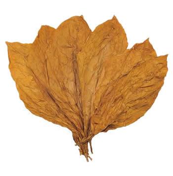 nicaraguan-ct-shade-leaves