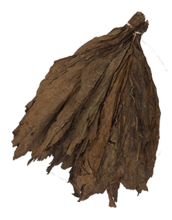 Honduran Binder Leaf