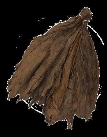Honduran-Binder-Leaf