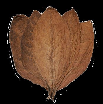Honduran-Conerico-Seco-Wrapper