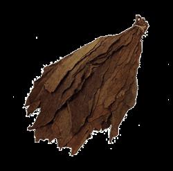 Brazilian Habano Viso Filler / Binder Leaf