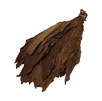brazilian-habano-viso-filler-binder