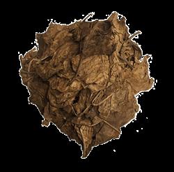 Nicotiana Rustica [Wild Tobacco]
