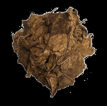 nicotiana-rustica-wild-tobacco